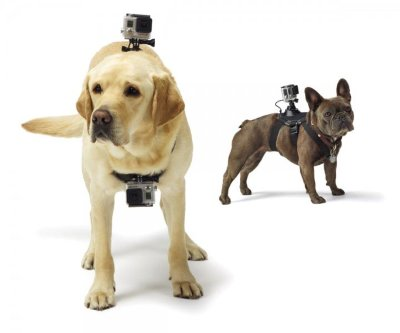 Набор для собаки GoPro Fetch Dog Harness